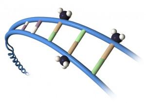 methyl group on DNA.jpg